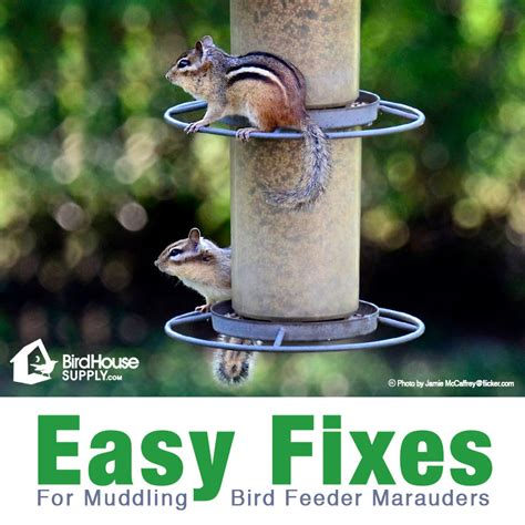 6 feeder thieves and how to stop them birdhousesupply