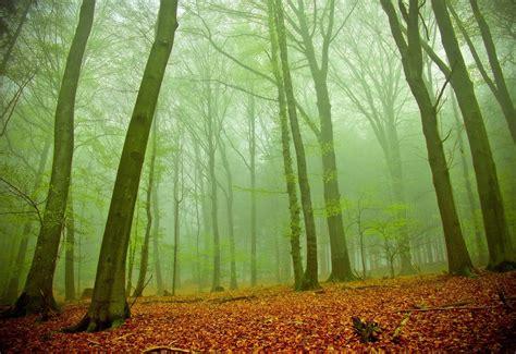 imagenes de bosques verdes banco de im 225 genes para ver disfrutar y compartir 24