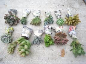 diy succulents recycled letters diy succulent garden