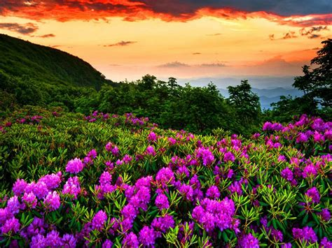 purple spring flowers forest green red dark cloud mountain