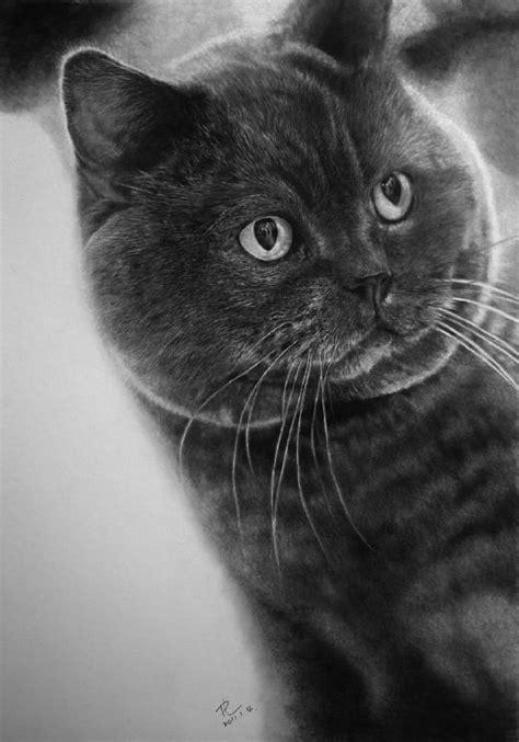 Épinglé par Janine Louis sur Hyperréaliste !   Dessin chat
