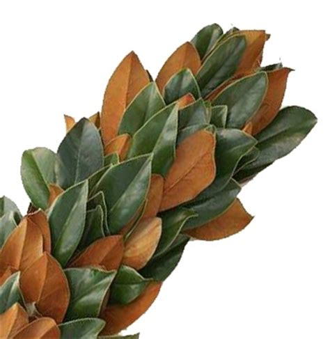 magnolia leaves wedding flowers foliage pinterest