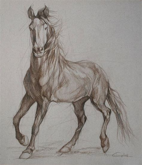 mustang horse drawing detailed horse another idea for my horse tattoo tattoos
