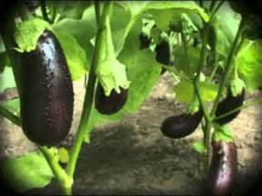how to plant a vegetable garden tips on growing home