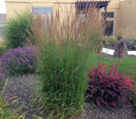 backyard project access ideas for landscaping with ornamental grasses