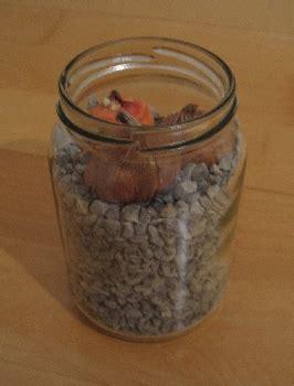 blumenzwiebeln im glas spiellandschaft stadt