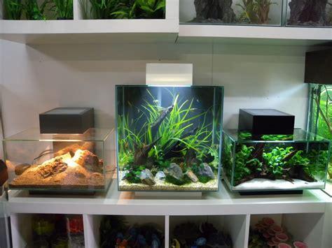 Fluval Edge 46l Aquascape by Fluval Edge Shop Displays Uk Aquatic Plant Society
