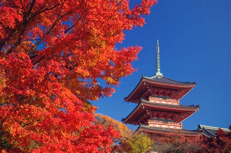 pacific holidays unveils japan vacation specials with airfare