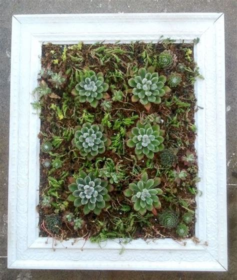 Succulent Frame My Farmscape - 24 best xeriscape dreams images on succulents