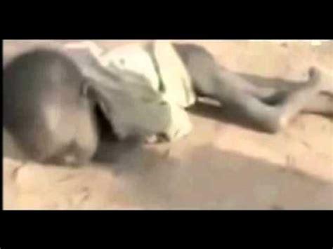 imagenes de niños que mueren de hambre ni 241 os muriendo de hambre en somalia youtube