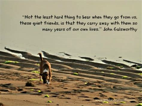 comforting words for death of a pet 21 comforting loss of a pet quotes