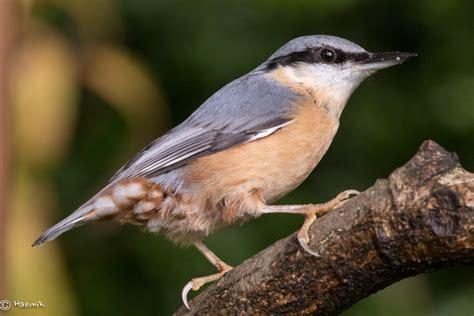 Garden Birds by Tuesday Garden Birds All Creatures Wildlife The