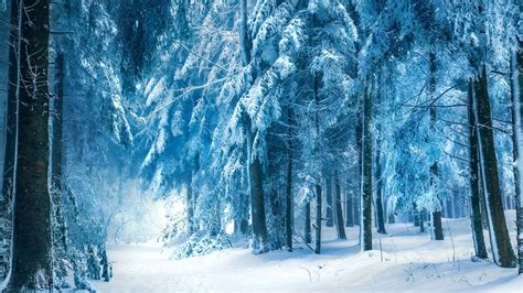 wallpaper blue forest snow forest wallpapers wallpaper cave