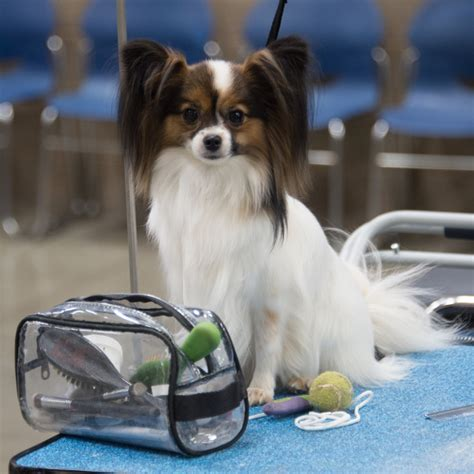grooming seattle 2018 reserved grooming space seattle kennel club