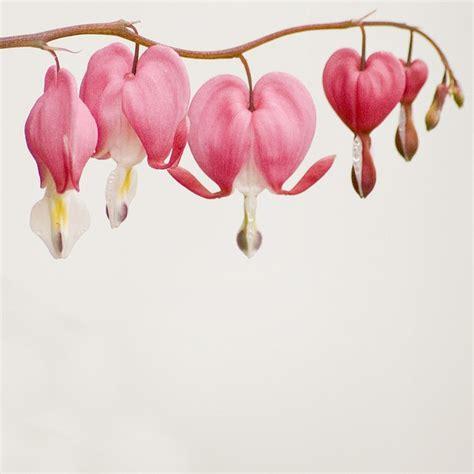 Hearts White Tatuering Och Inspiration Bleeding Flower Meaning