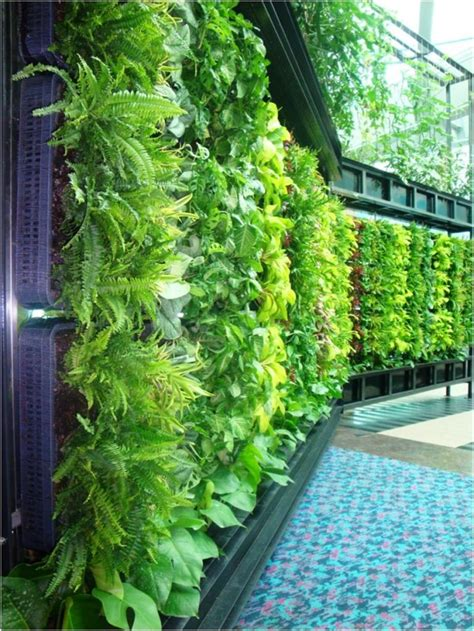 Vertical Gardens Inside Green Diy Living Wall Changi Airport