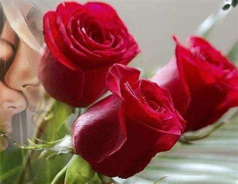 imagenes de rosas para enamorar rosas rojas para enamorar imagenes de rosas