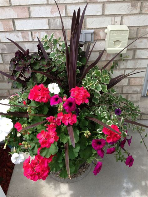 beautiful potted plants  bought  costco plants