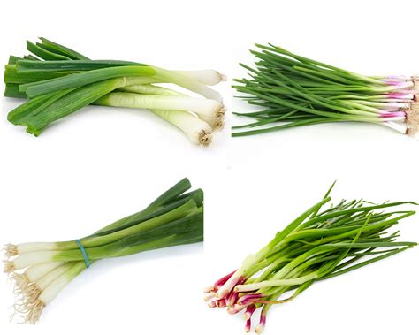 what is a spring spring onion vs green onion thosefoods com