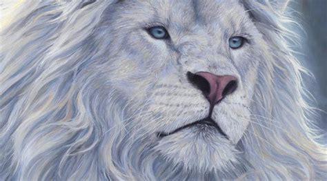 imagenes leon blanco fotos cr 243 nicas de alasia xxiii la ca 237 da del le 243 n blanco