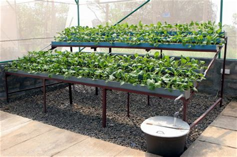 Harga Sabut Kelapa Per Ton article bioteknologi konvensional cara menanam hidroponik