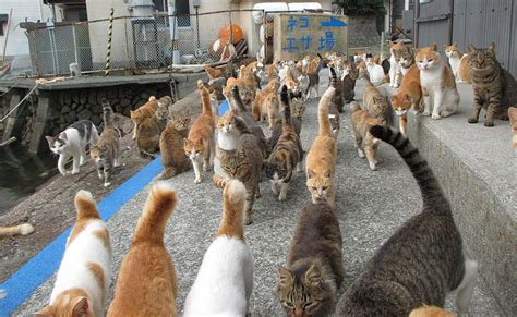 cat island in japan japan s cat island asks internet for food gets more than