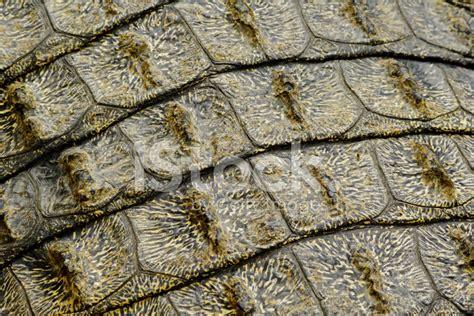 Crocodile Armour crocodile armour stock photos freeimages
