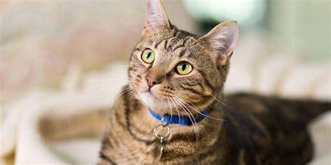 cat facts the pet parent s a to z home care encyclopedia books cat hill s pet