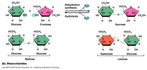 carbohydrates a polymer new exles of carbohydrates polymer exle