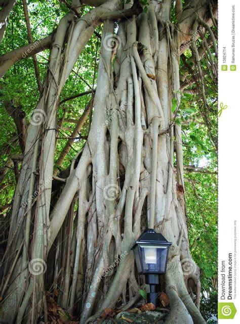 trees in miami miami trees stock images image 13824714