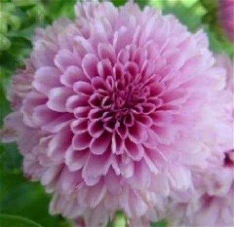 significato dei fiori amicizia fiori dell amicizia significato dei fiori fiori