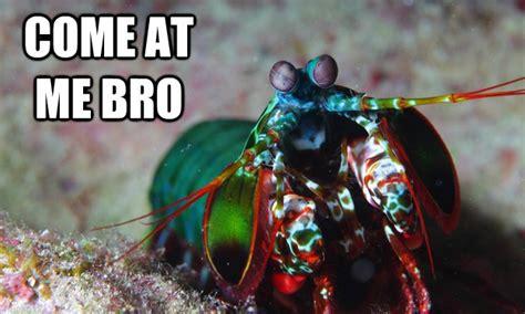 true facts   mantis shrimp   totally fight