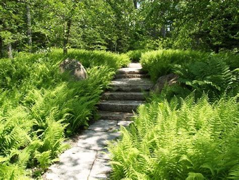 Fern Garden Design Ideas Pinterest Fern Garden Ideas
