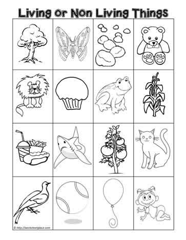 Living And Nonliving Things Worksheets Pdf by Living Or Non Living Sort Worksheets