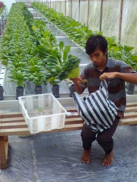 Jual Bibit Cabe Cirebon jual cocopeat cirebon t sel 0811 2631 304 media tanam hidroponik