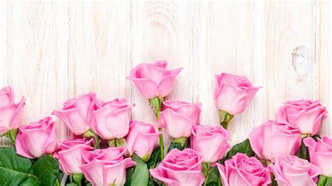 imagenes de flores wallpapers rosa rosa flores fondo de madera fondos de pantalla
