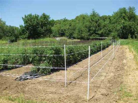 Garden Electric Fence Electric Fences Help Keep Deer Out Of Garden