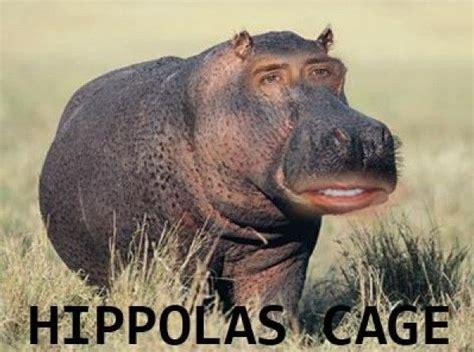 Baby Hippo Meme - hippo meme memes celebrity memes lol funny humor lol