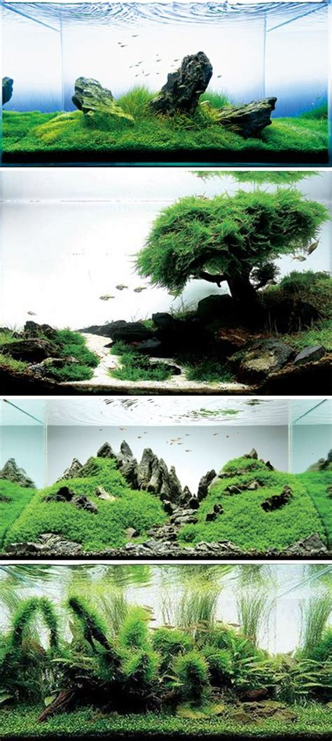 aquascape takashi amano takashi amano aquascaping pinterest dr who zen and
