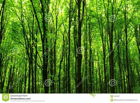 view of forest habitat royalty free stock photograph in forest royalty free stock photography image 5481027