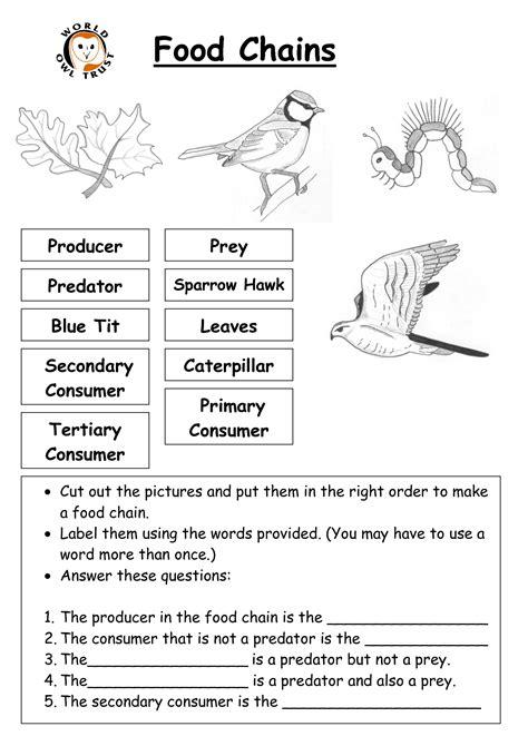 food chain worksheet pdf food chain worksheet high school pdf food chain lesson