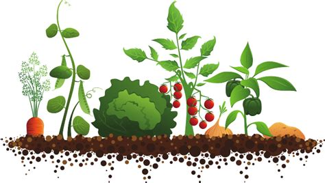 Vegetable Garden Clipart vegetable garden clipart familyhouse co clipartix