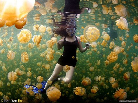 News Roundup Bushfires Jellyfish And Gorillas Attack by National Geographic Magazine S Annual Photo Of The Day