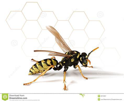 Visitor Pattern C Black Wasp | paper wasp stock image image 2813391