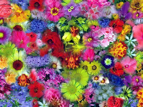 imagens de flores e rosas file flores gfdl99 jpg wikimedia commons