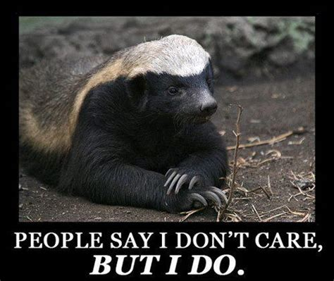 Badger Memes - honey badger meh ro