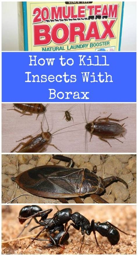 what keeps bed bugs away 17 best ideas about bed bugs treatment on pinterest bed