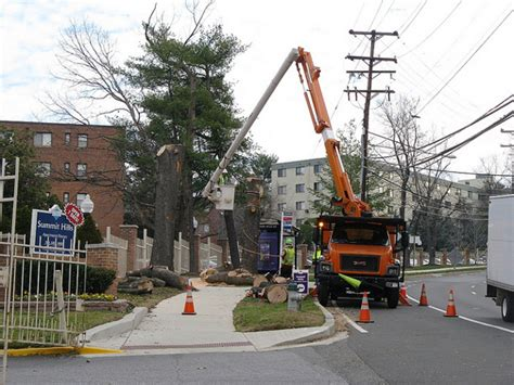 cut your own trees montgomey county maryland fighting trees in montgomery county md deeproot