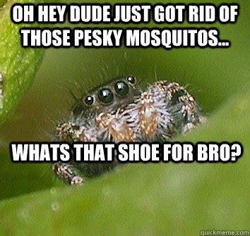 Spider Bro Meme - spider monkey meme memes