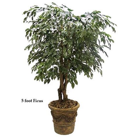 8 foot outdoor artificial ficus tree with natural trunks